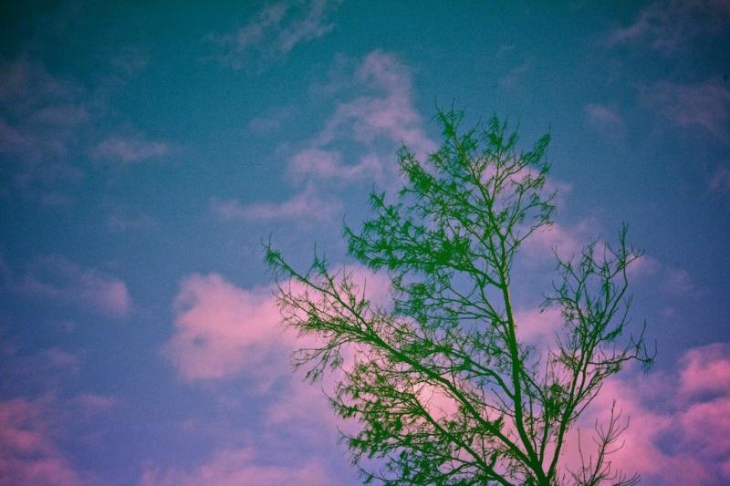 Lone Tree- Split-toning